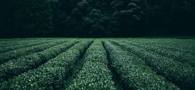 innovacion-cultivo