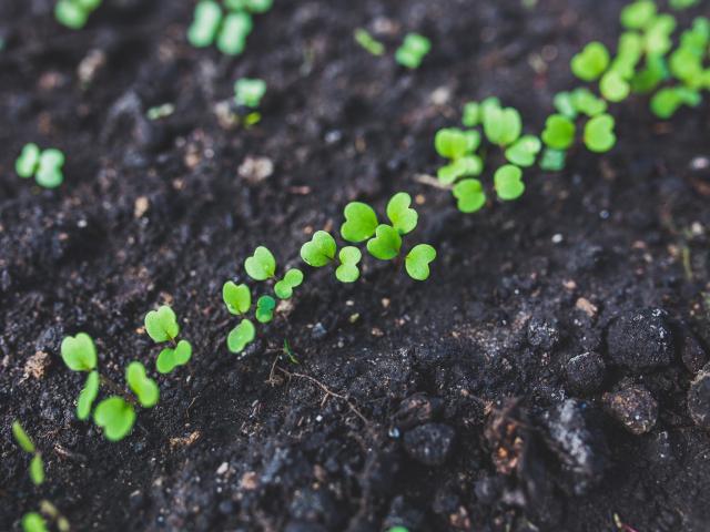 Limpieza de suelos contaminados NEIKER