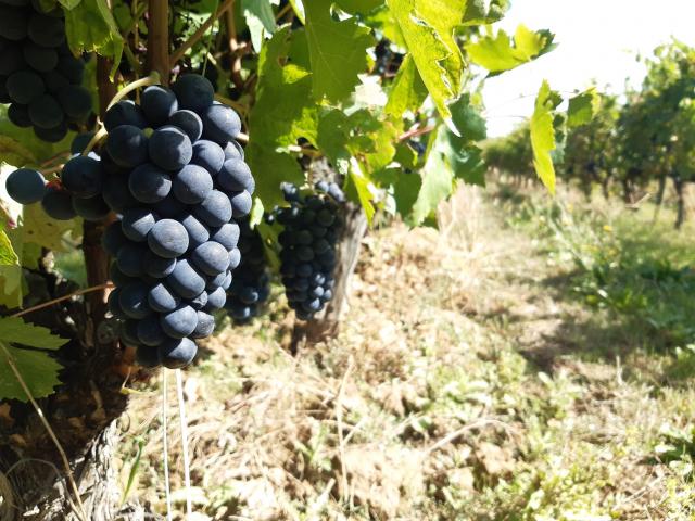 Cambio climatico y uva NEIKER