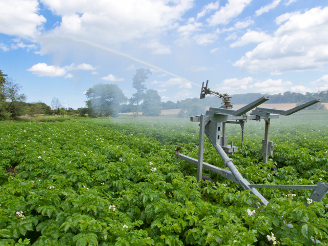 potato-irrigation