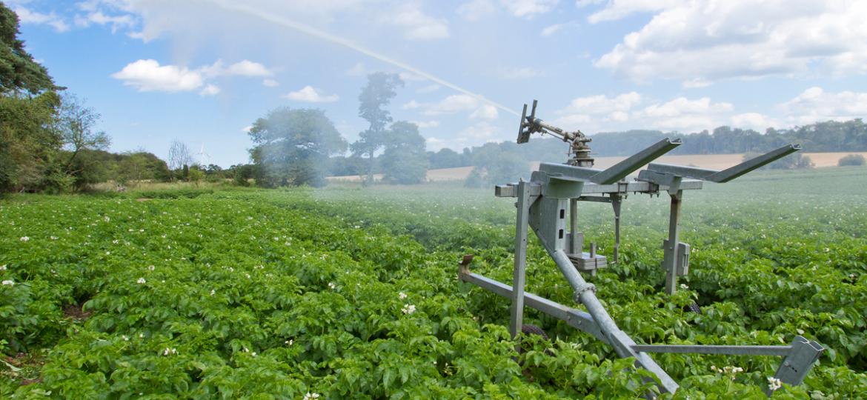 potato-irrigation