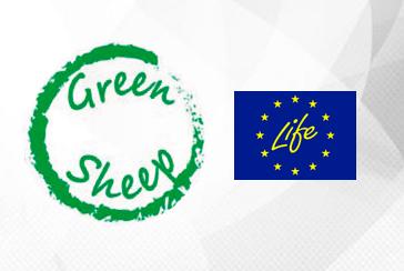 LIFE GREEN SHEEP